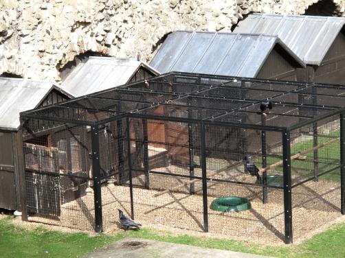 Тауэрские вороны