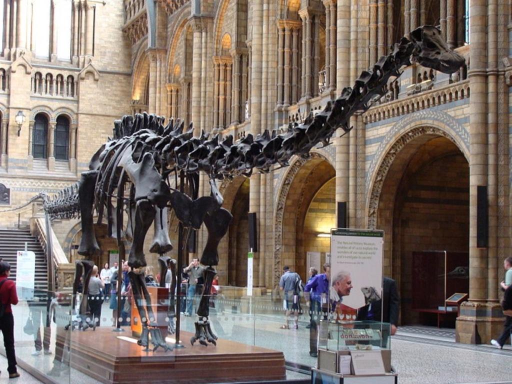 26 метровый скелет Диплодока