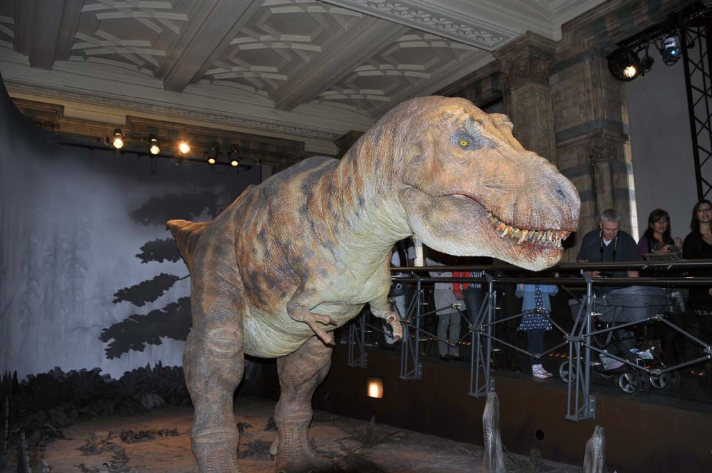 Тиранозавр в музее