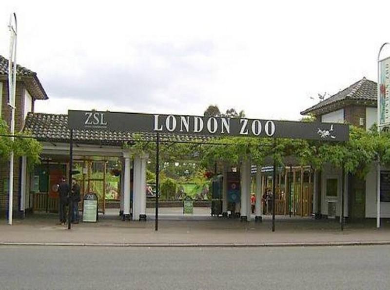 Кто открыл клетку в зоопарке