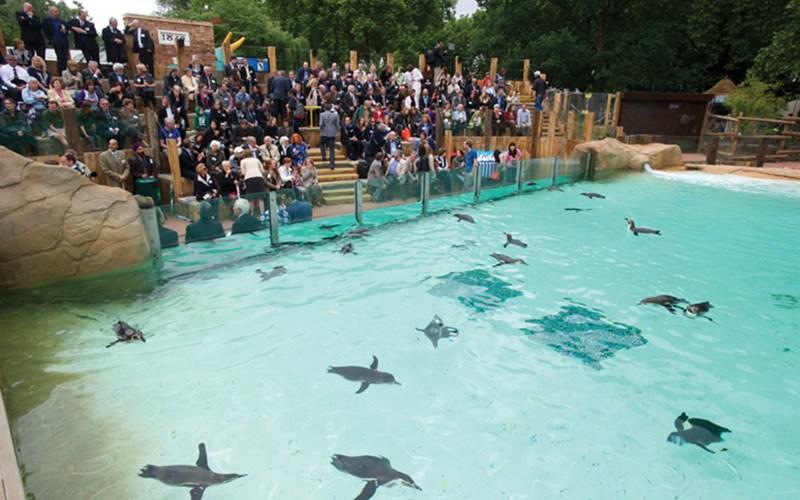 Пингвиний бассейн